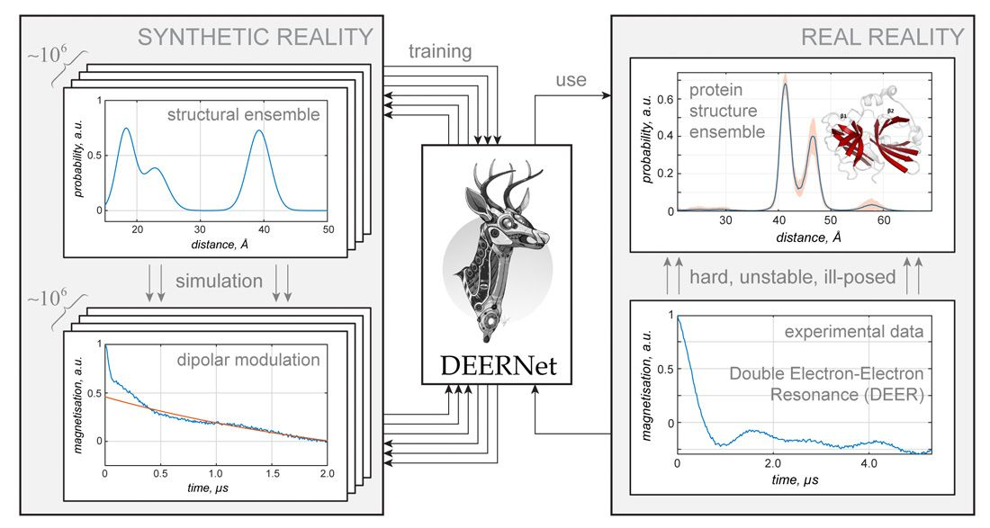 Figure 3. A schematic of DEERNet, a deep neural network infrastructure written in MATLAB with Statistics and Machine Learning Toolbox to solve a well-known structural biology problem: distance measurement between unpaired electrons.
